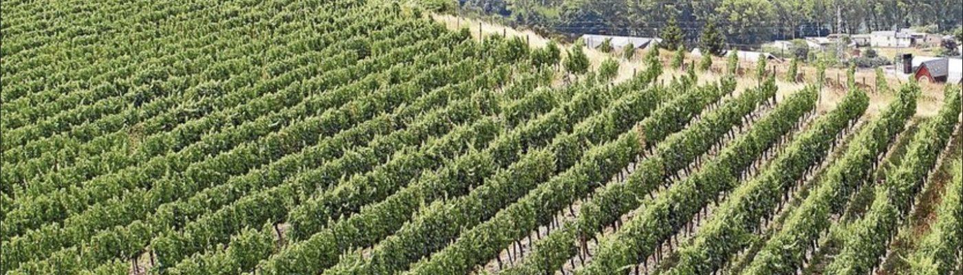 elcor-viña-do-valdeorras